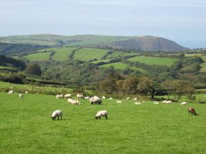 De Britse 'countryside' huist vele grote en kleine festivals (foto: Derek Voller / CC BY-SA 2.0).